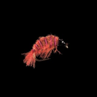 MP 76 -Freshwater Shrimp-