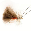 CDC Sedge brown 12