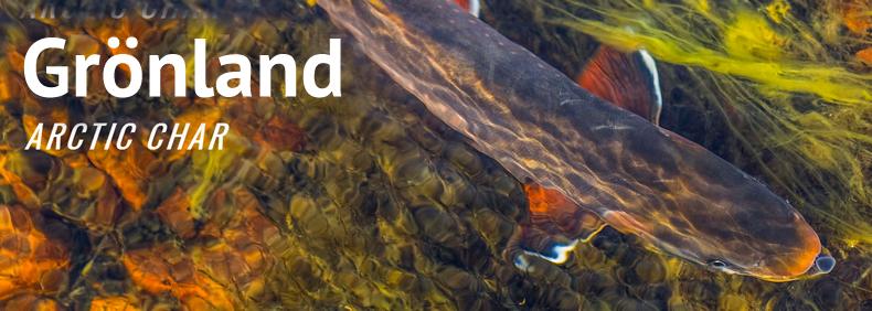 Fliegenfischen Thomas Dürkop Reisen weltweit Grönland